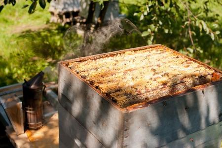 Récolte du miel 2011