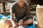 Un birman récolte le maïs.