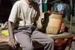Birman pendant le roulage du thé.